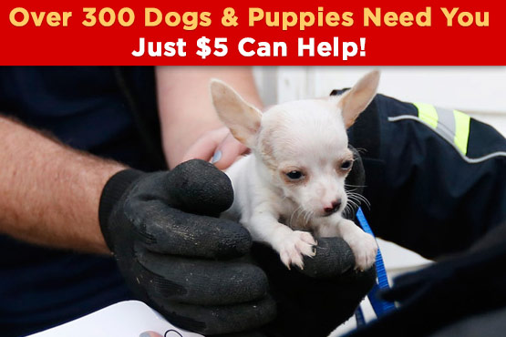 Over 300 Dogs & Puppies Need You