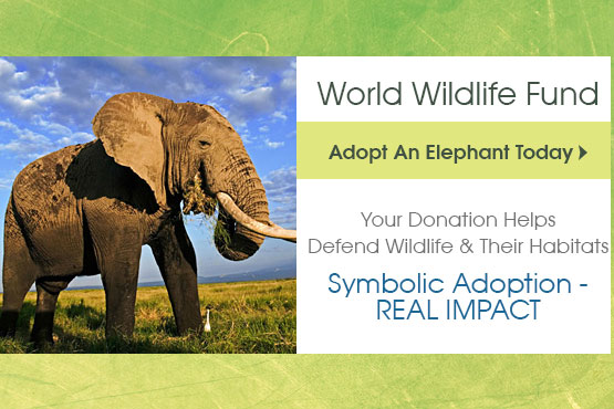 Give Today To Help Elephants