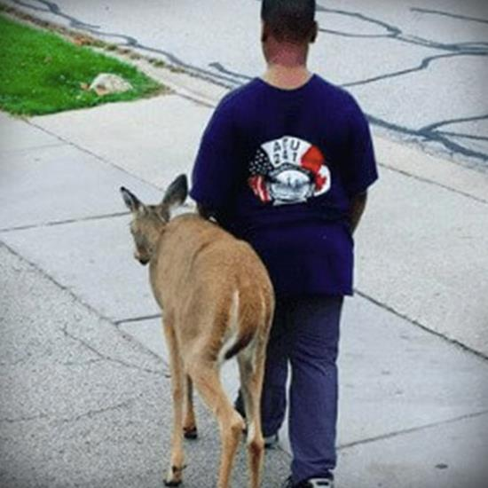 Boy and deer walking across the street