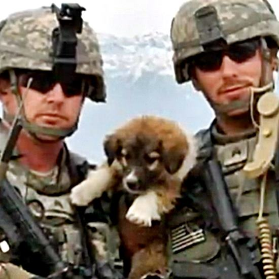 Two soldiers in full gear holding an adorable brown black and white stray puppy