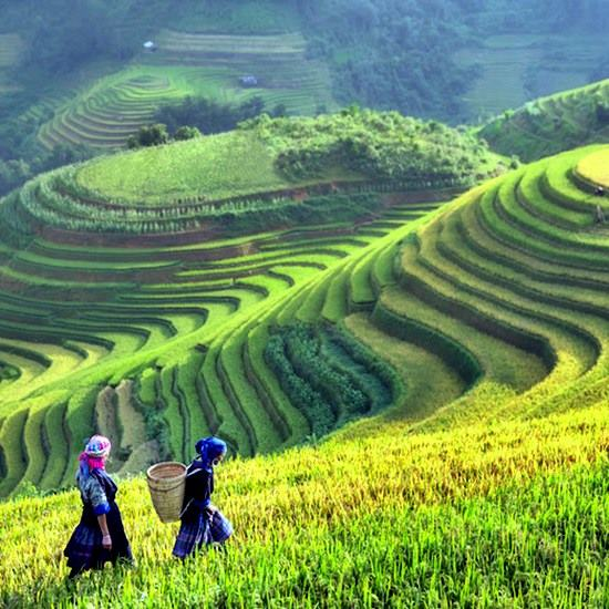 Two women walking in a vast terraced rice field under a sunny sky