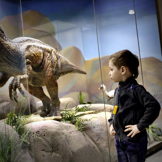 Child looking at dinosaur display