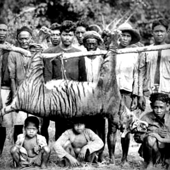Old photo of dead Caspian tiger