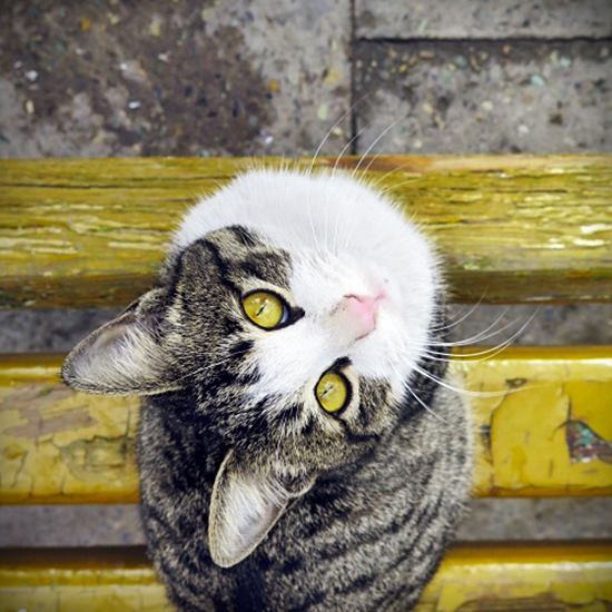 Cute cat on a bright yellow subway bench