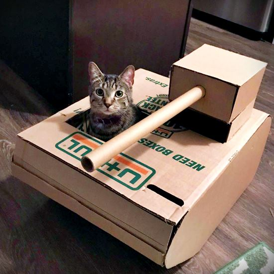 Cat who loves his cardboard tank