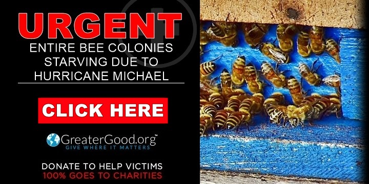Bees are starving after the devastation caused by hurricane Michael - HELP NOW!