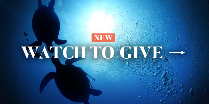 Watch To Give - Help Turtles Now
