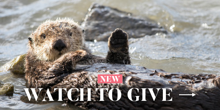 Watch To Give - Help Otters Now