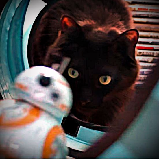 Cole the cat as inspected by BB-8