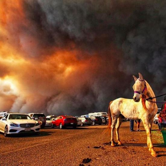 Horse masked to get away from wildfire