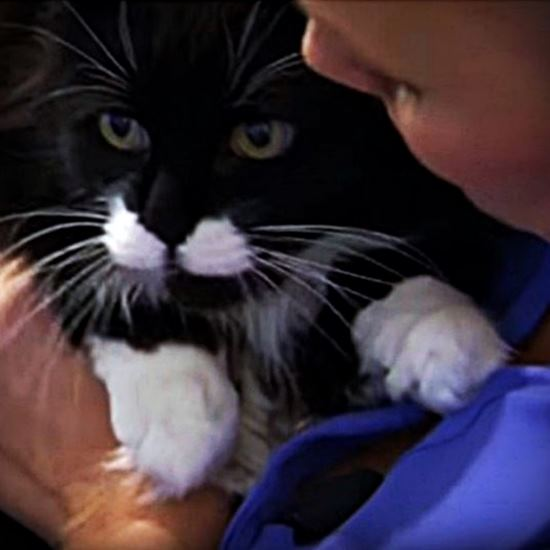 Beautiful long-haired tuxedo cat in the arms of a cancer survivor
