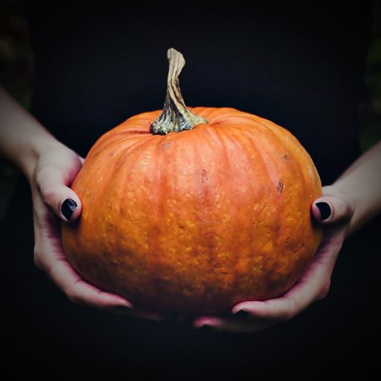 Hands holding a beautiful pumpkin