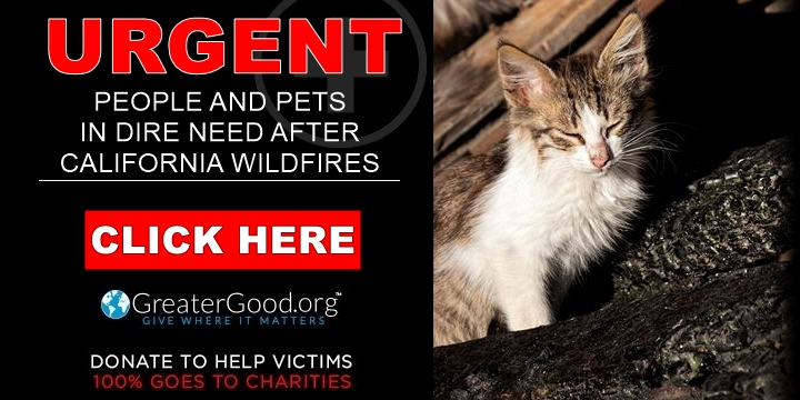 Catastrophic California wildfires - help people and pets now!