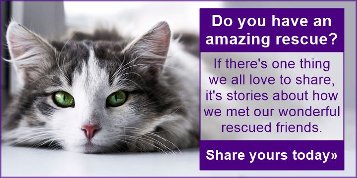 Do you have an amazing rescue story - share yours today!