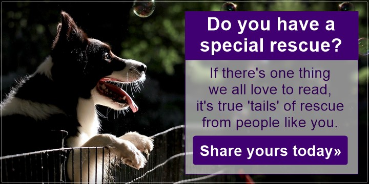 We love your rescue stories - the best ones come from caring and wonderful people like you - share yours today!