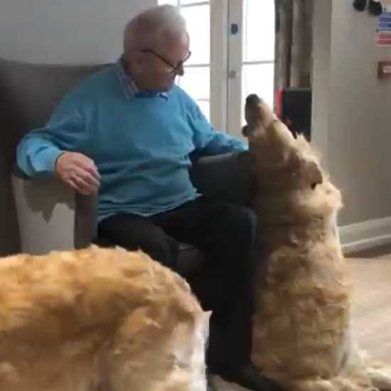 Senior happily surrounded by sweet dogs