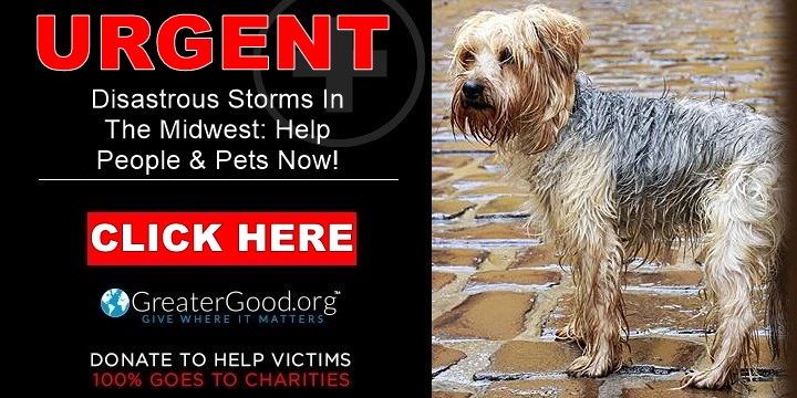 Tornadoes and floods devastate the midwest - help people pets and wildlife recover!