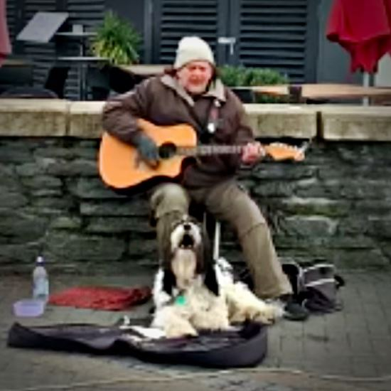 That would be a black and white sheepdog howling at the top of his lungs while his human sings for a crowd
