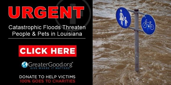 Catastrophic flooding threatens people and pets in Louisiana - Help Now!