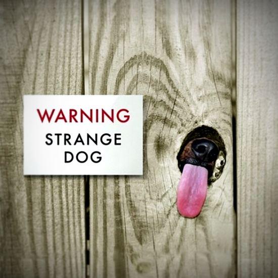Sign says - Warning - Strange Dog