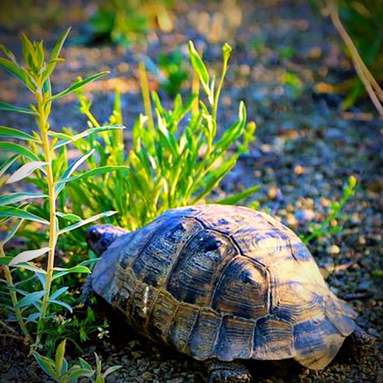 Cute tortoise in the weeds