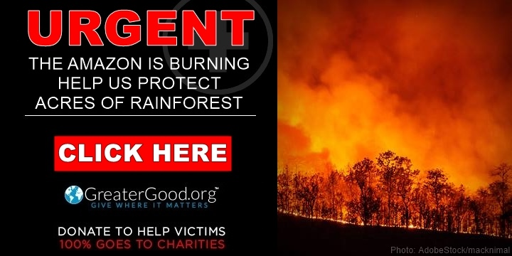 The Amazon is Burning - Help Us Save Critical Acres of Rainforest - Act Now!