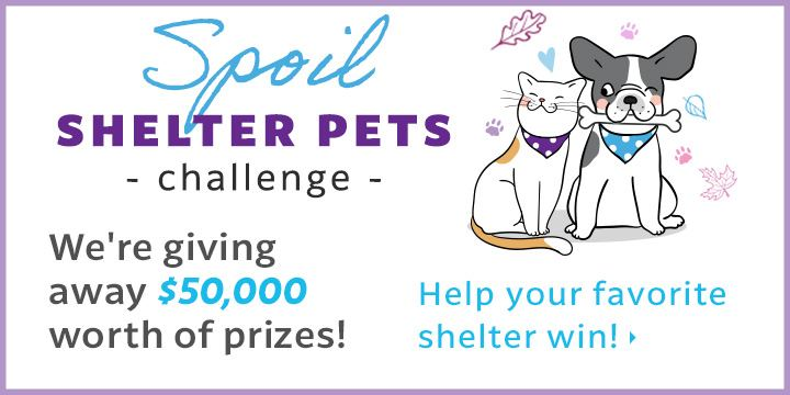 Vote today to seriously spoil some sweet adoptable pets at your favorite shelter!