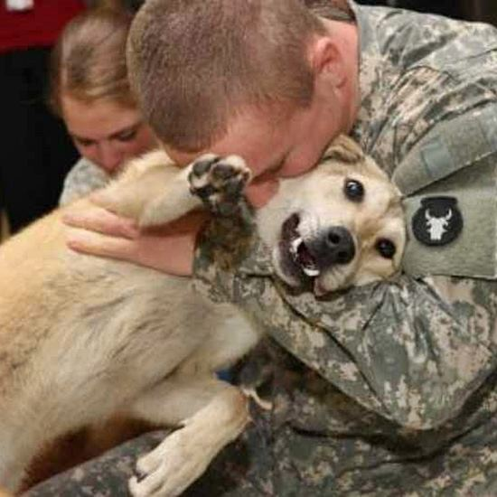 Dog being held by a man in uniform