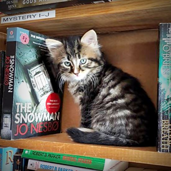 There is a kitten on that bookshelf in the mystery section