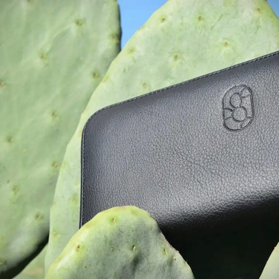 Prickly pear cactus and a wallet