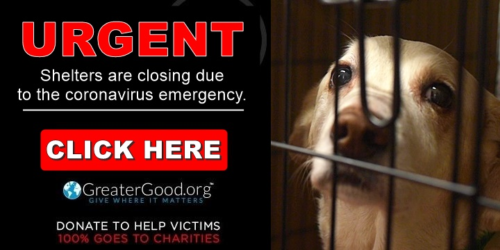 Shelters are closing due to the coronavirus emergency - Help Now!
