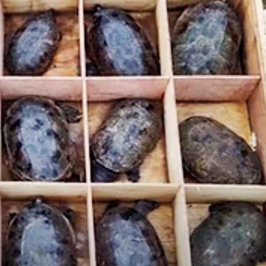 Turtles in tiny boxes