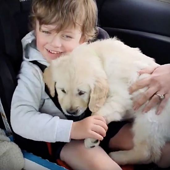 Toddler given a puppy