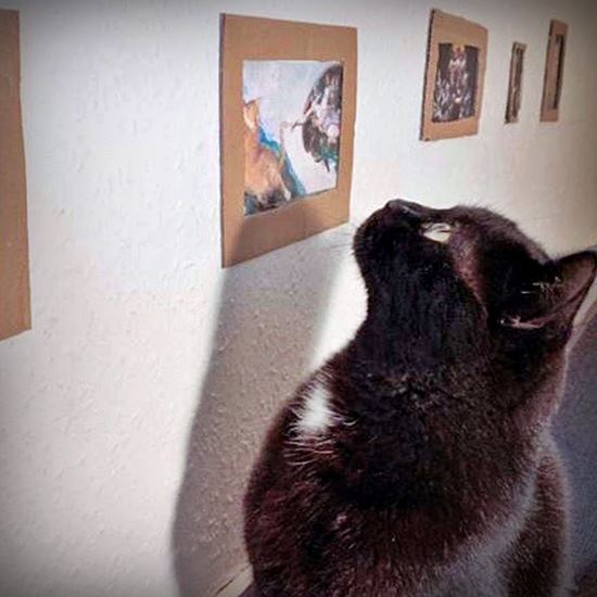 Black cat looking at art