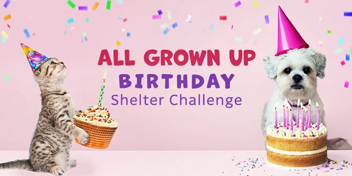 The Animal Rescue Site Is Celebrating Our 18th Birthday With A Shelter Challenge - Vote today!