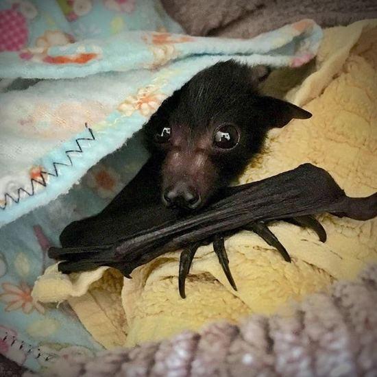 Recovering bat