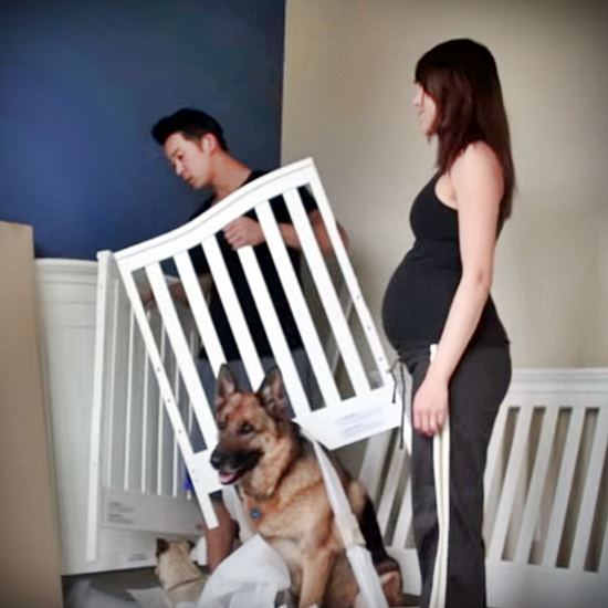 Pregnant woman with man and two dogs - little one in the bottom right