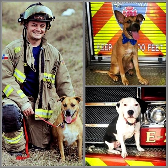 Firefighter and foster dogs