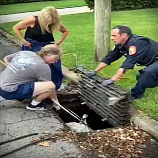 Fishing out a swan in the sewer