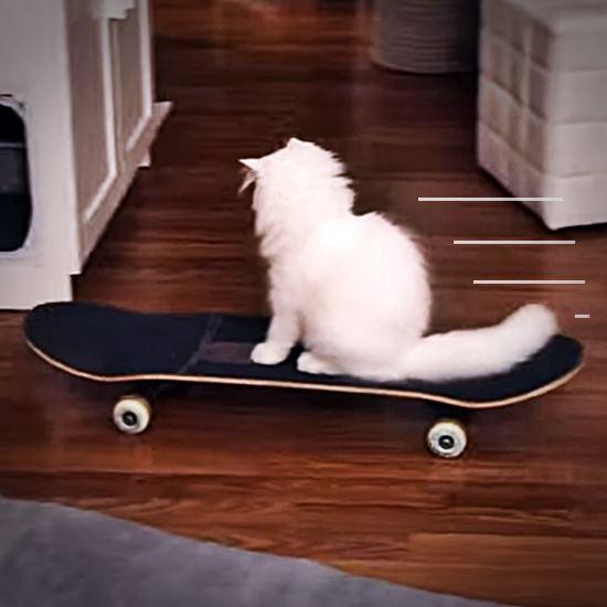 White floofy cat skateboarding in a house