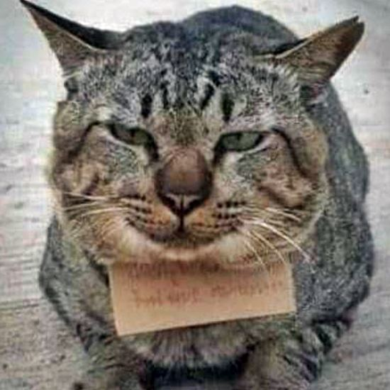 Ordinary brown tabby wearing a funny note