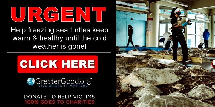 URGENT - help keep sea turtles safe and warm during freezing weather