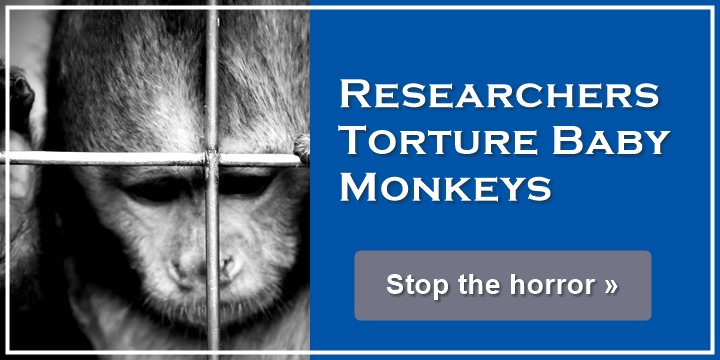 Research Center Tortures Baby Monkeys - Stop the horror