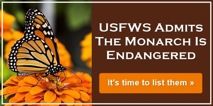 USFWS Admits The Monarch Is Endangered - It's time to list them