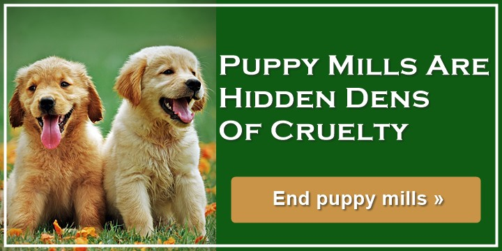 Puppy Mills Are Hidden Dens of Cruelty - End puppy mills