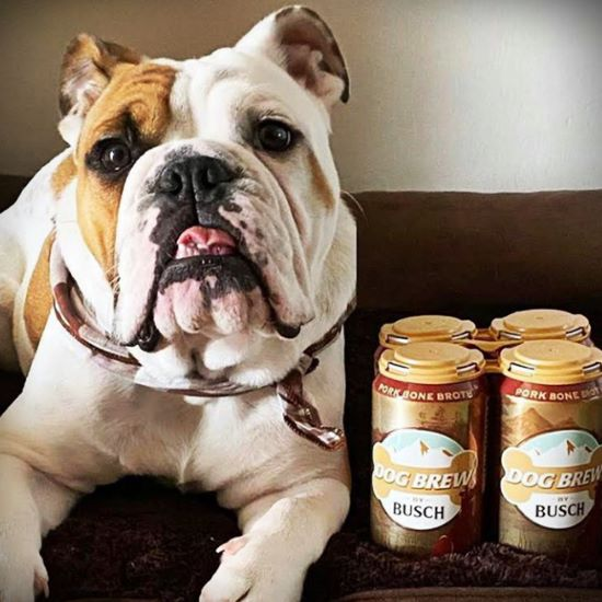 Bulldog with a six pack