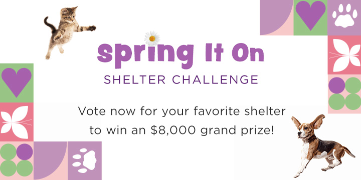 Spring It On Shelter Challenge