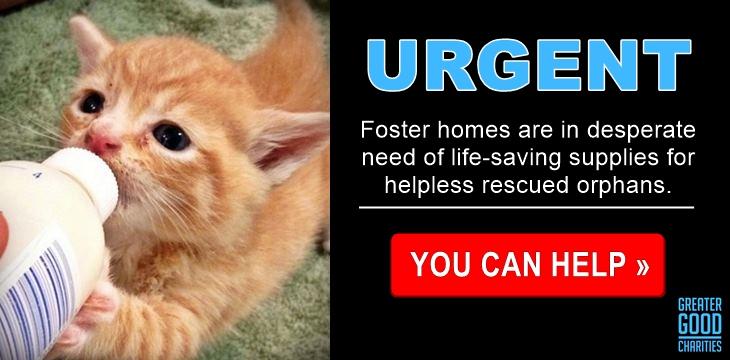 Emergency Care: Life-Saving Formula Kits For Fur Babies - Help Now!