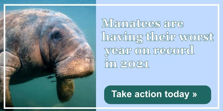 Help Protect Floridas Lovable Manatees