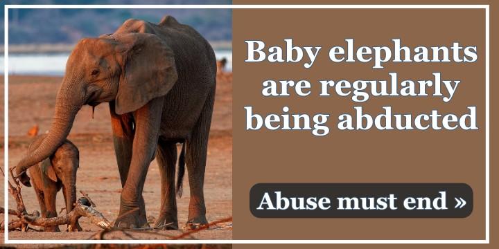 Help Protect Zimbabwe Elephants